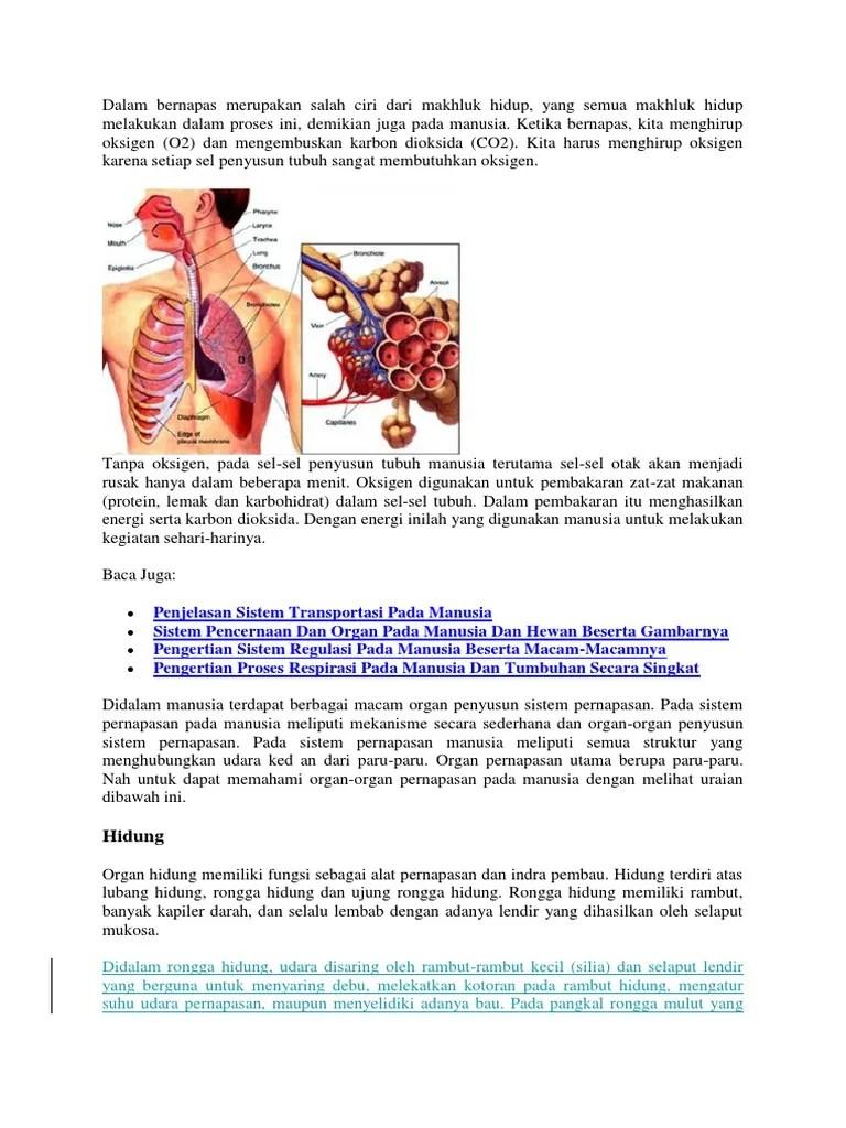 Organ Penyusun Sistem Transportasi Pada Manusia : organ, penyusun, sistem, transportasi, manusia, Organ, Penyusun, Sistem, Pencernaan, Fungsinya