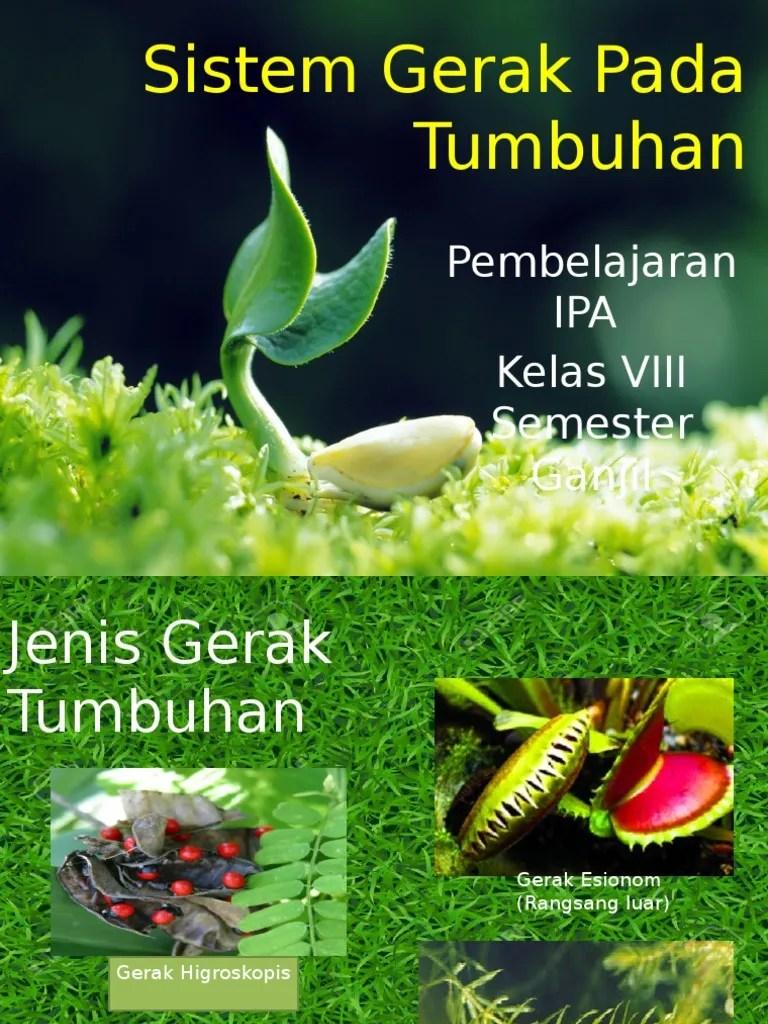 Gerak Pada Tumbuhan : gerak, tumbuhan, Sistem, Gerak, Tumbuhan, Lessons, Blendspace
