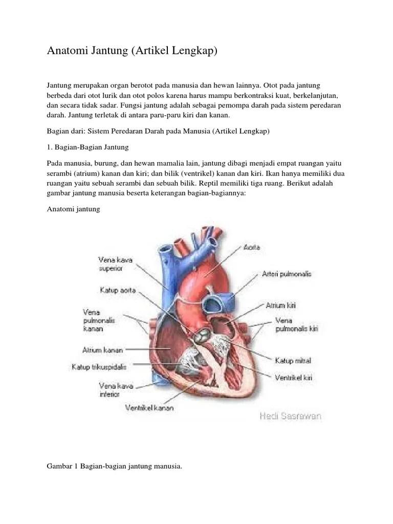 Gambar Bagian Jantung Dan Fungsinya : gambar, bagian, jantung, fungsinya, Gambar, Anatomi, Jantung, Bagian, Bagiannya
