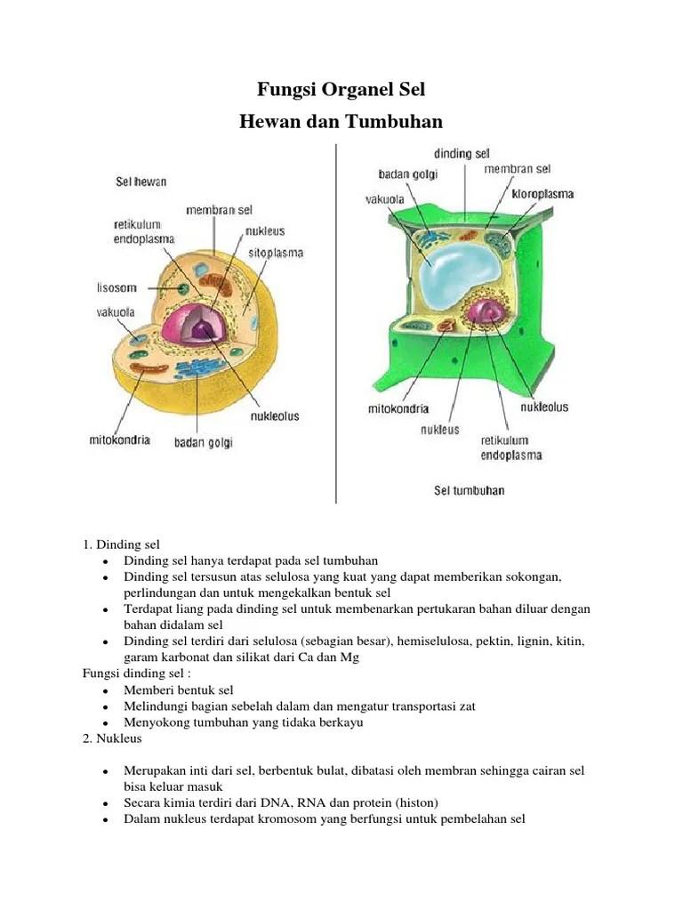 Gambar Organel Sel Dan Fungsinya : gambar, organel, fungsinya, Fungsi, Organel, Sel.docx