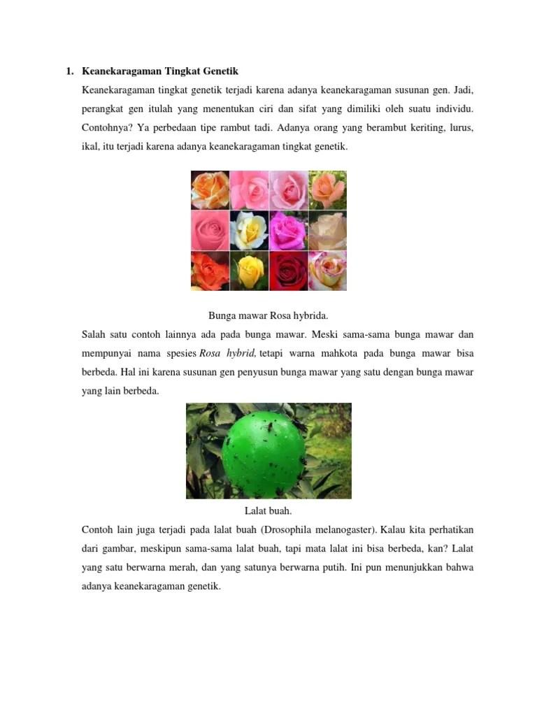 Contoh Keanekaragaman Jenis : contoh, keanekaragaman, jenis, Kliping, Keanekaragaman, Hayati