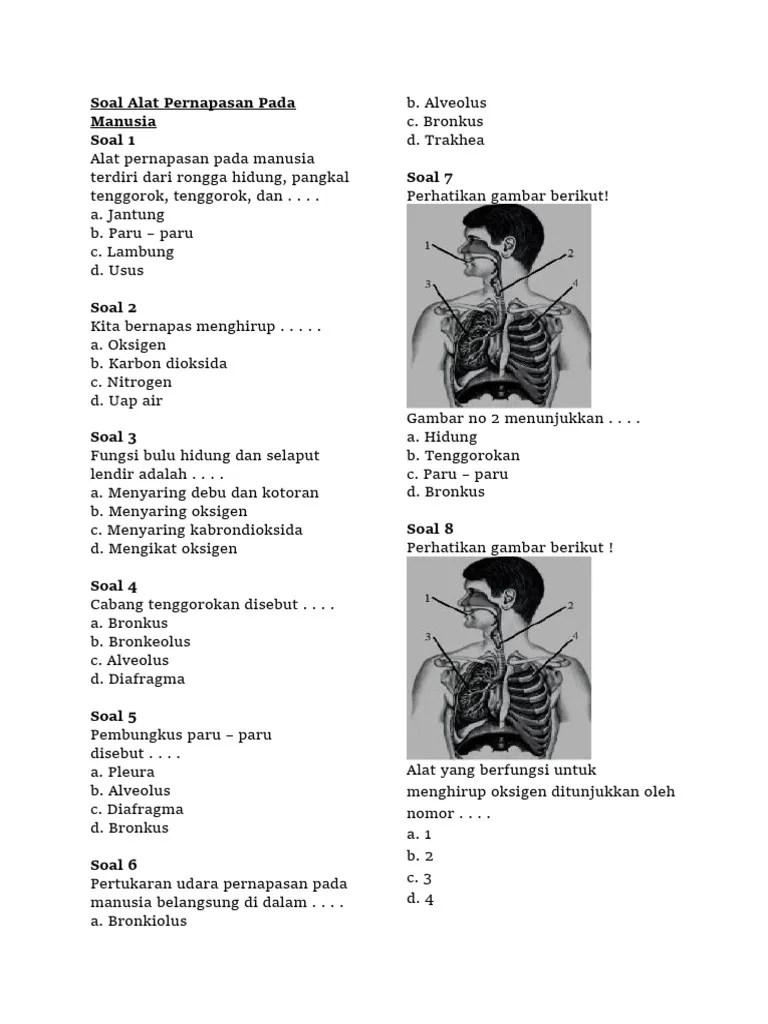 Cabang Tenggorokan Disebut : cabang, tenggorokan, disebut, Pernapasan, Manusia