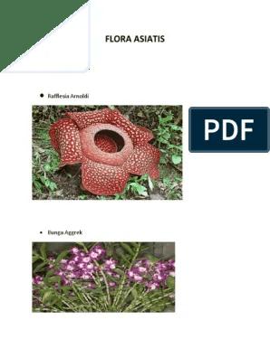 Flora Asiatis : flora, asiatis, Flora, Asiatis:, Rafflesia, Arnoldi