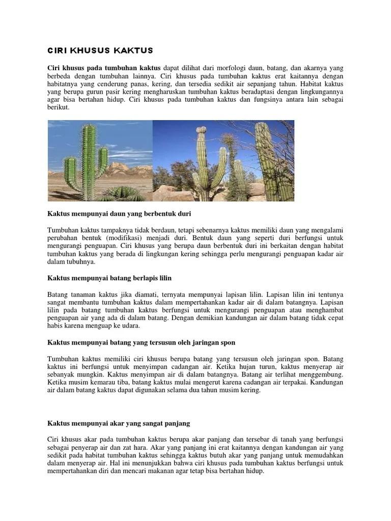 Daun Daun Pada Kaktus Berbentuk : kaktus, berbentuk, Tanaman, Kaktus, Berbentuk, Berfungsi, Untuk, Edukasi.Lif.co.id