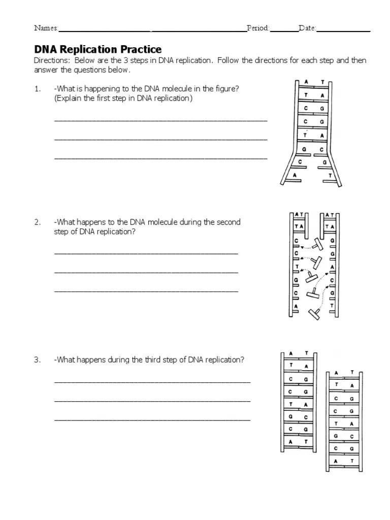 Dna Replication Practice Worksheet Answer Key Pdf : replication, practice, worksheet, answer, Replication, Worksheet