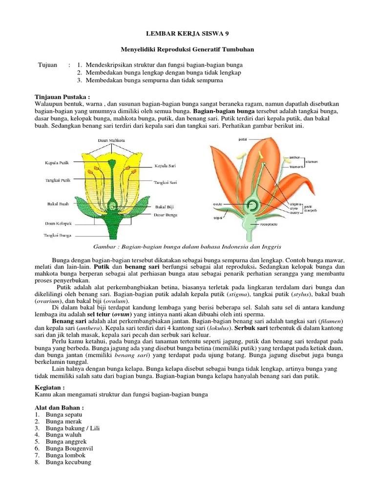 Gambar Bunga Dan Bagiannya : gambar, bunga, bagiannya, Inilah, Gambar, Bunga, Bakung, Bagian, Bagiannya, Populer, Informasi, Seputar, Tanaman