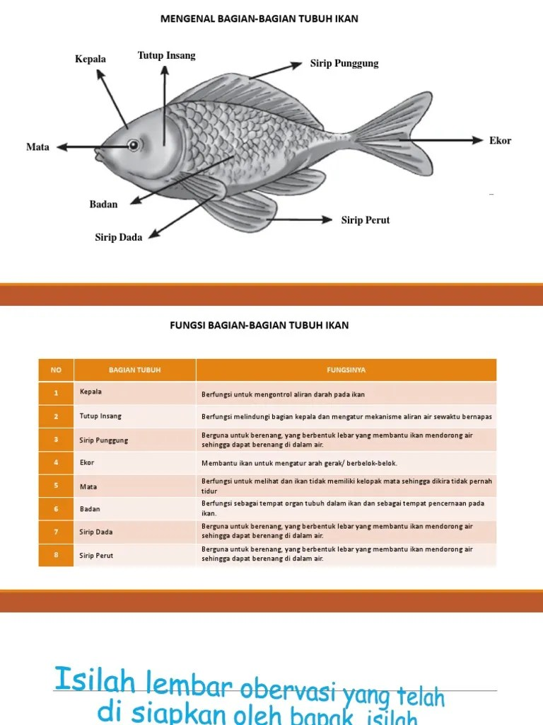 Fungsi Organ Tubuh Pada Ikan : fungsi, organ, tubuh, Presentation