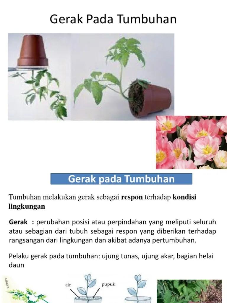 Gerak Pada Tumbuhan Adalah : gerak, tumbuhan, adalah, Gerak, Tumbuhan