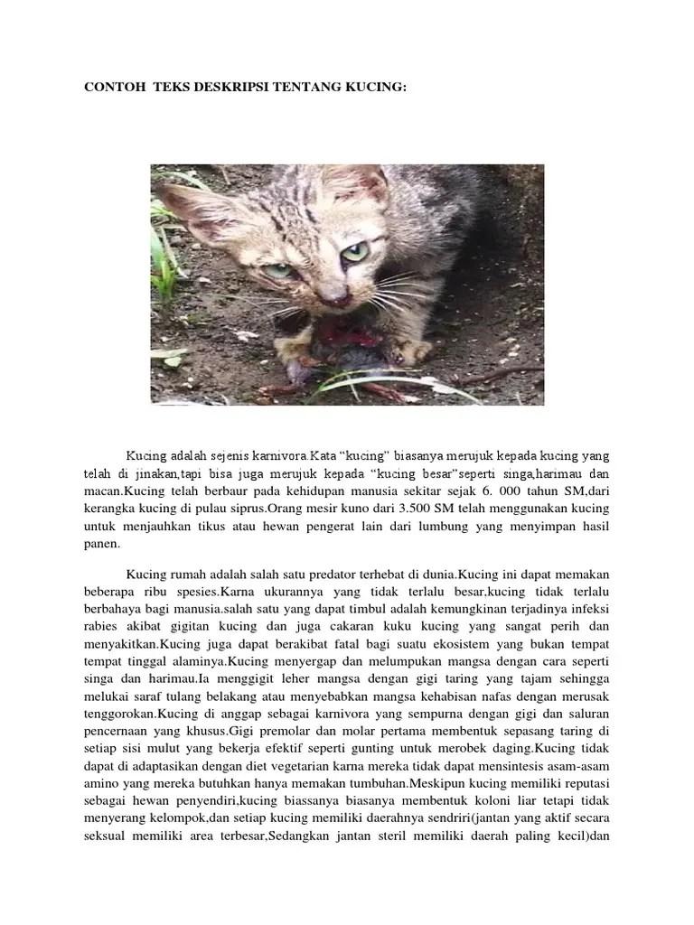 Teks Deskripsi Tentang Kucing : deskripsi, tentang, kucing, Contoh, Deskripsi, Tentang, Kucing