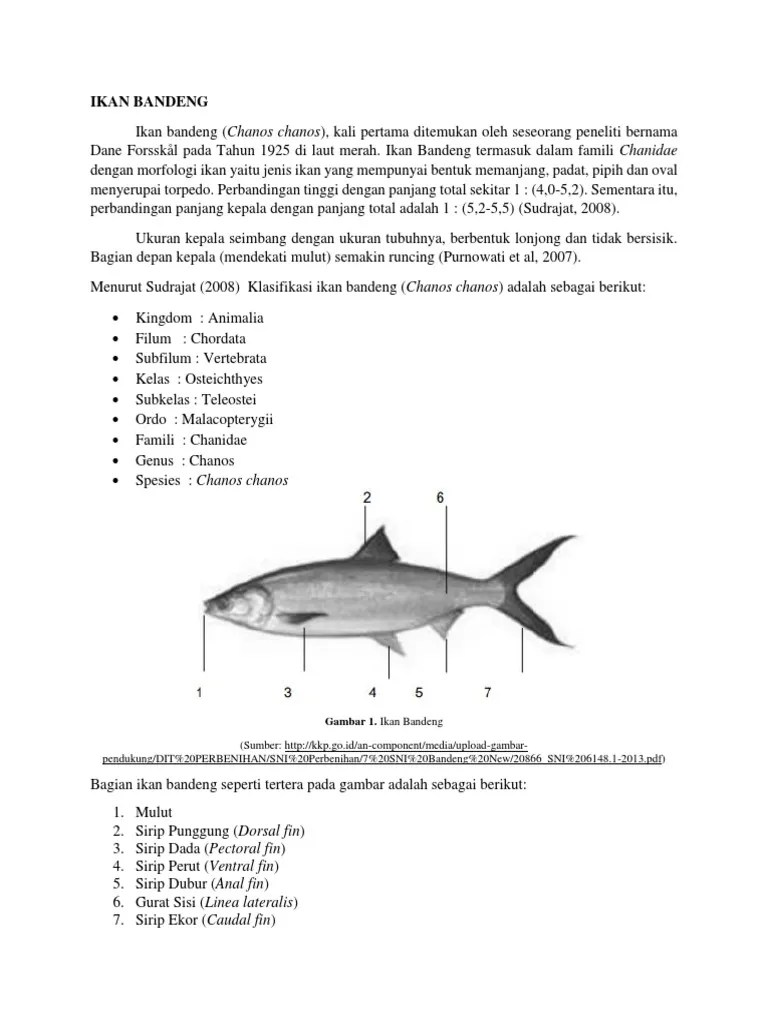 Bagian Ikan Dan Fungsinya : bagian, fungsinya, BANDENG