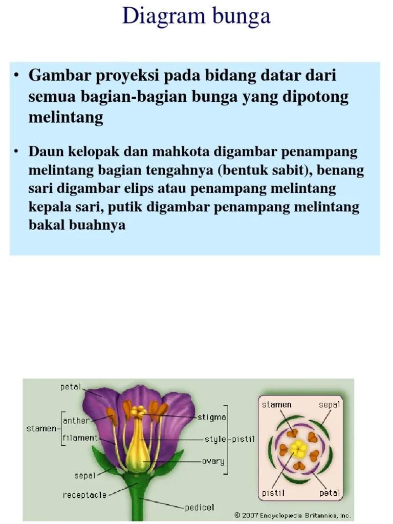 Penampang Bunga : penampang, bunga, Diagram, Bunga