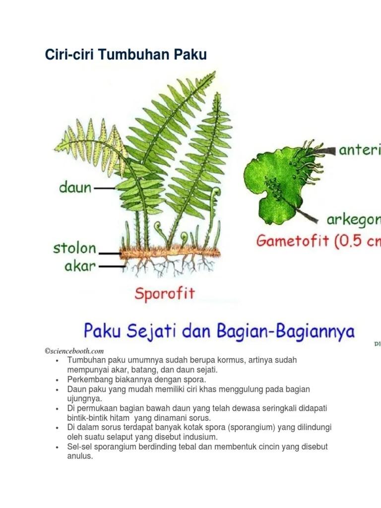 Sebutkan Ciri Ciri Tumbuhan Paku : sebutkan, tumbuhan, Penghasil, Spora, Tumbuhan, Disebut, Sebutkan, Mendetail