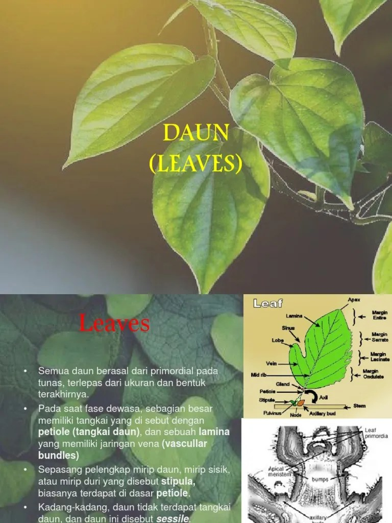 Daun Daun Pada Kaktus Berbentuk : kaktus, berbentuk, Daun.pptx, Branches, Botany