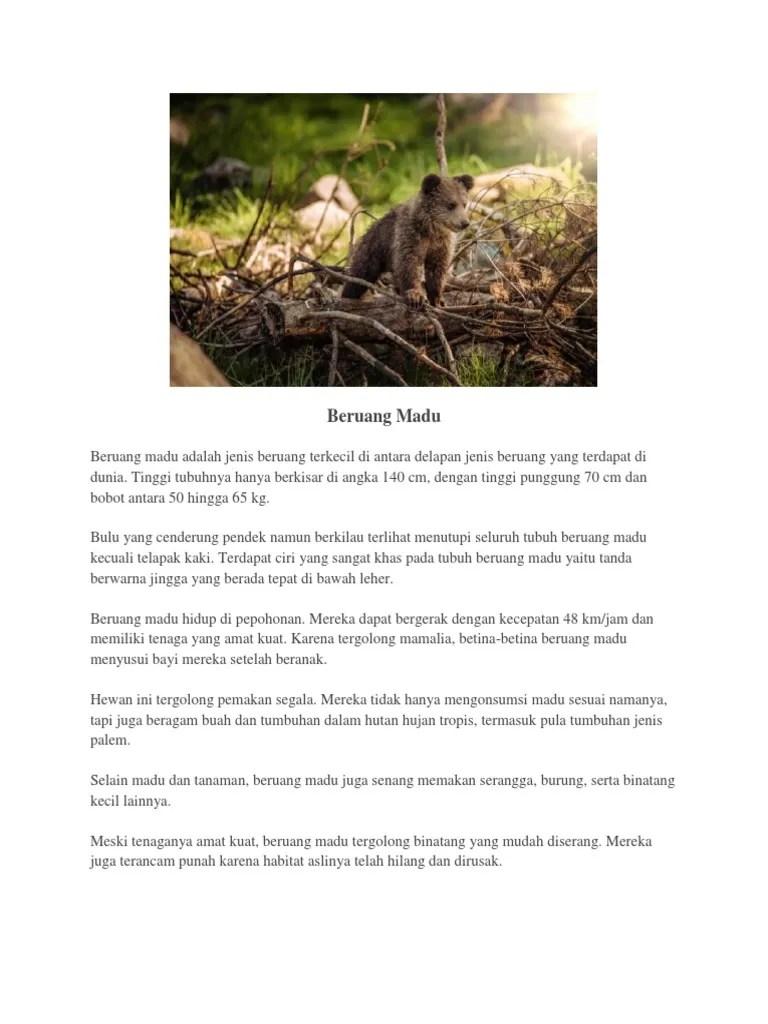 Ciri Ciri Hewan Beruang : hewan, beruang, Beruang, Madu.docx