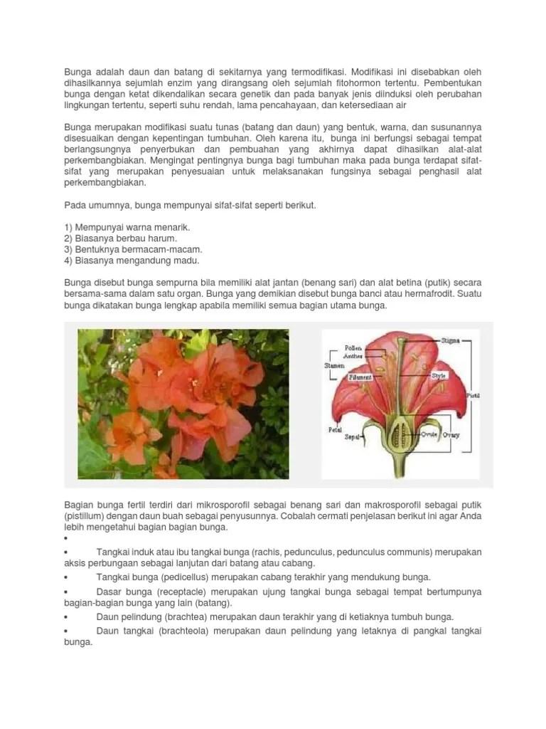 Contoh Bunga Hermafrodit : contoh, bunga, hermafrodit, Bunga, Adalah, Batang, Sekitarnya, Termodifikasi