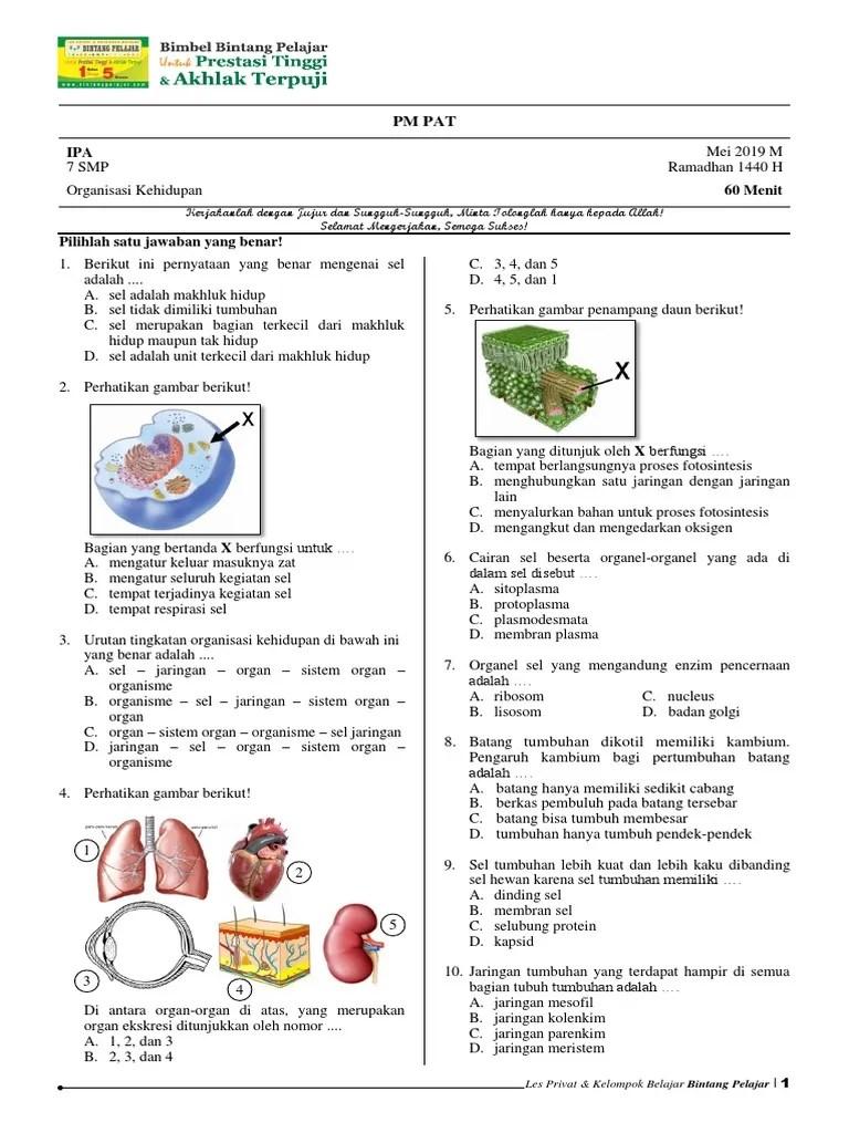 Sel Jaringan Organ Sistem Organ Organisme : jaringan, organ, sistem, organisme, Kelas, Organisasi, Kehidupan