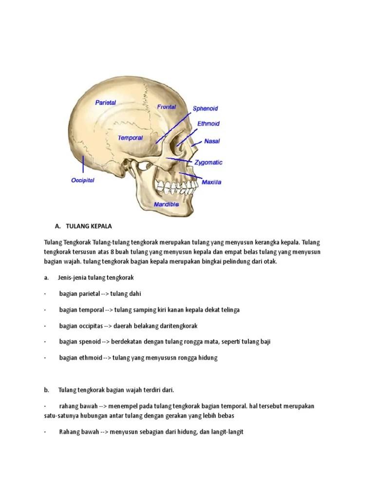 Gambar Tulang Baji : gambar, tulang, Tulang, Tengkorakkkkkaaaa