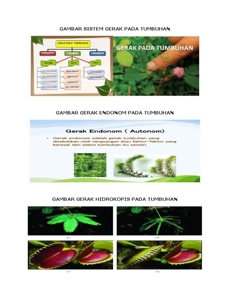 Gambar Kemotropisme : gambar, kemotropisme, GAMBAR, SISTEM, GERAK, TUMBUHAN.docx