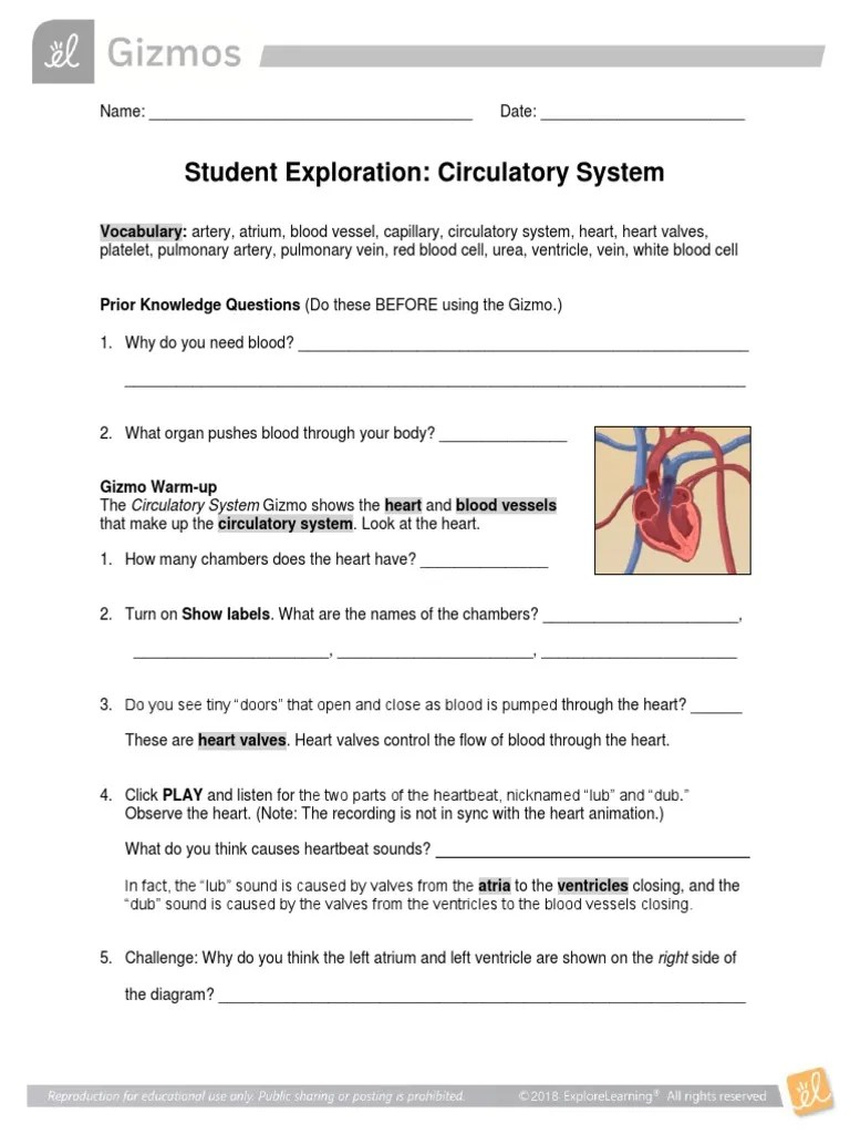 small resolution of CirculatorySystem Gizmo   Heart   Circulatory System