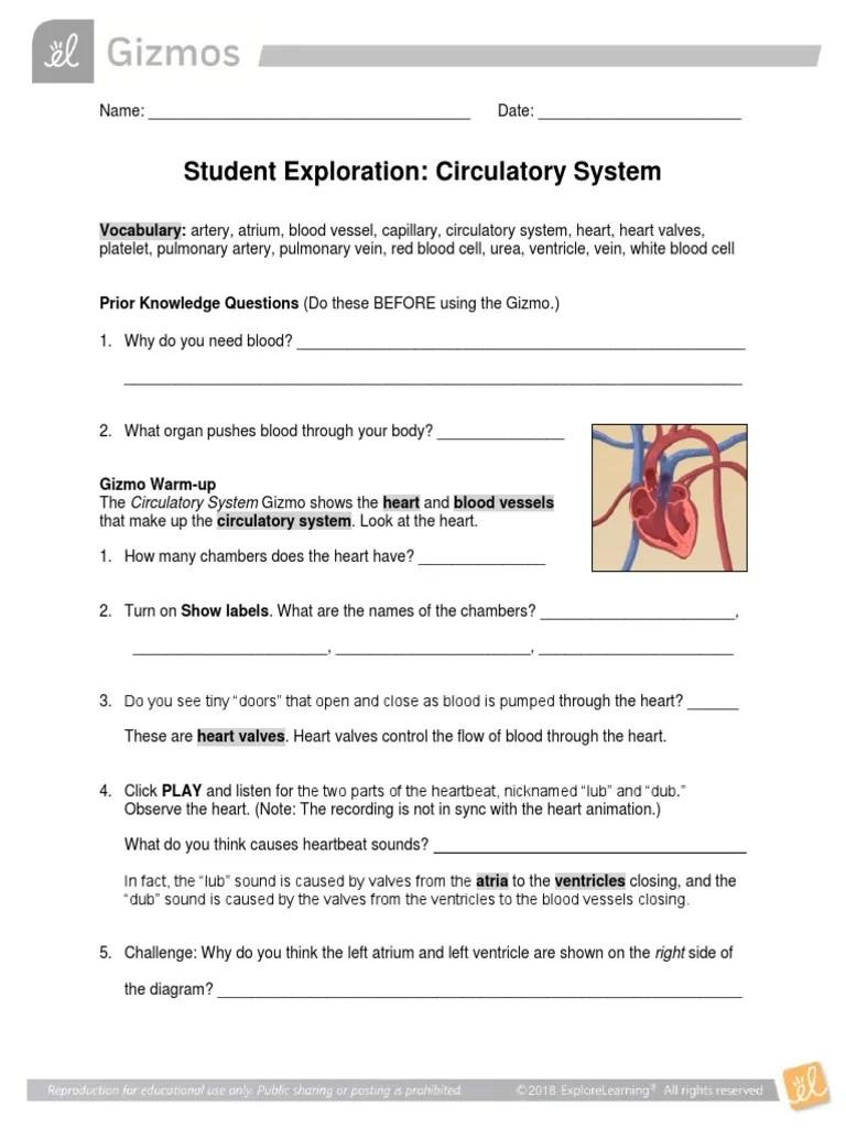 small resolution of CirculatorySystem Gizmo   Heart   Circulatory System
