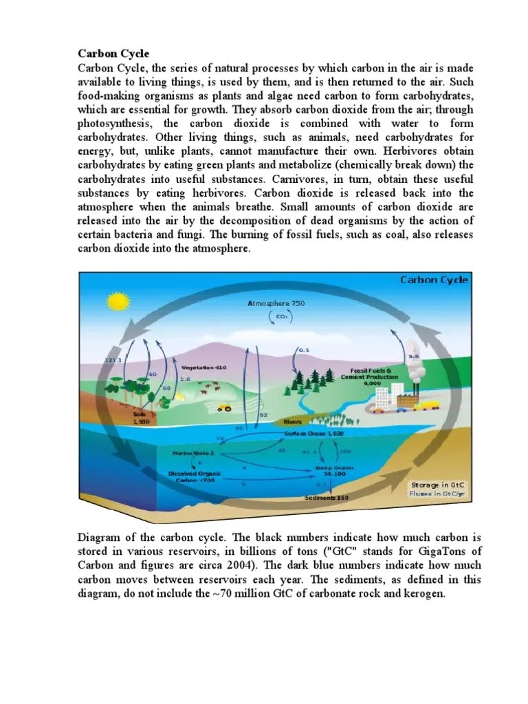 diagram of the carbon and nitrogen cycle [ 768 x 1024 Pixel ]