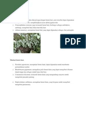 Manfaat Tumbuhan Lumut : manfaat, tumbuhan, lumut, Manfaat, Lumut, Tanduk, Kehidupan