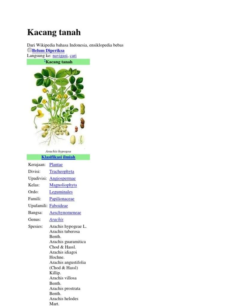 Nama Ilmiah Kacang Tanah : ilmiah, kacang, tanah, Kacang, Tanah