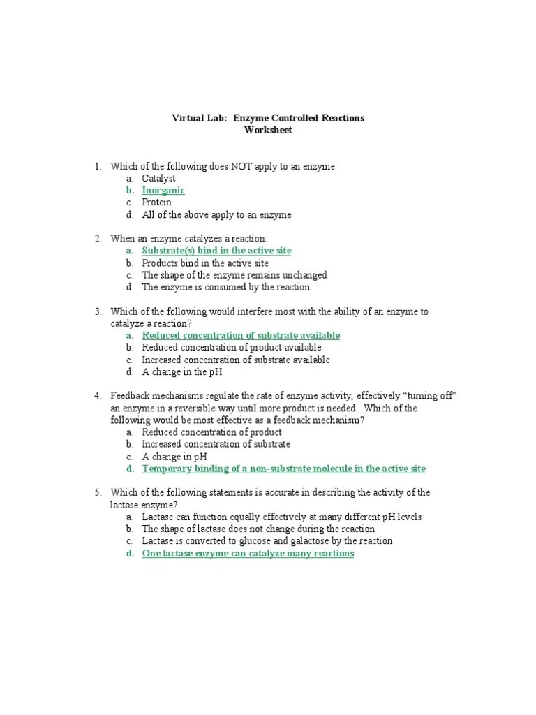 worksheet Enzyme Activity Worksheet collision theory worksheet free worksheets library download and w ksheet re cti r te mytourvn study site