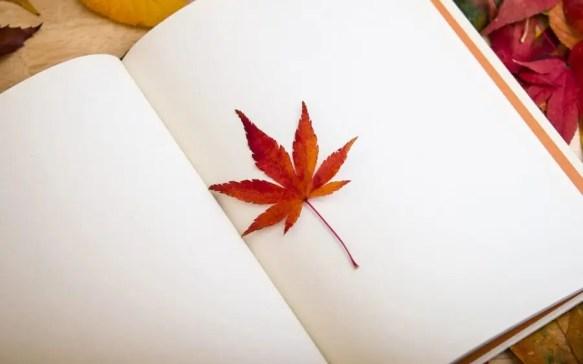 Estudar no Canadá através de um study permit. Post graduate Work Permit Program (PGWP)