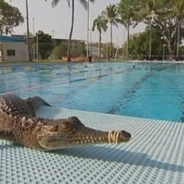 krokodille fundet i Malmø