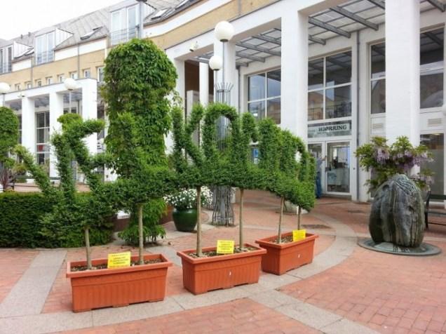 formklippet planter i hjørring - kulturaften © iminhave.dk