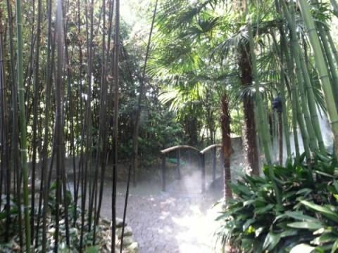 Kæmpe bambusskov i Heller garden © iminhave.dk