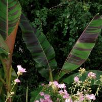 5 eksotiske planter til danske haver