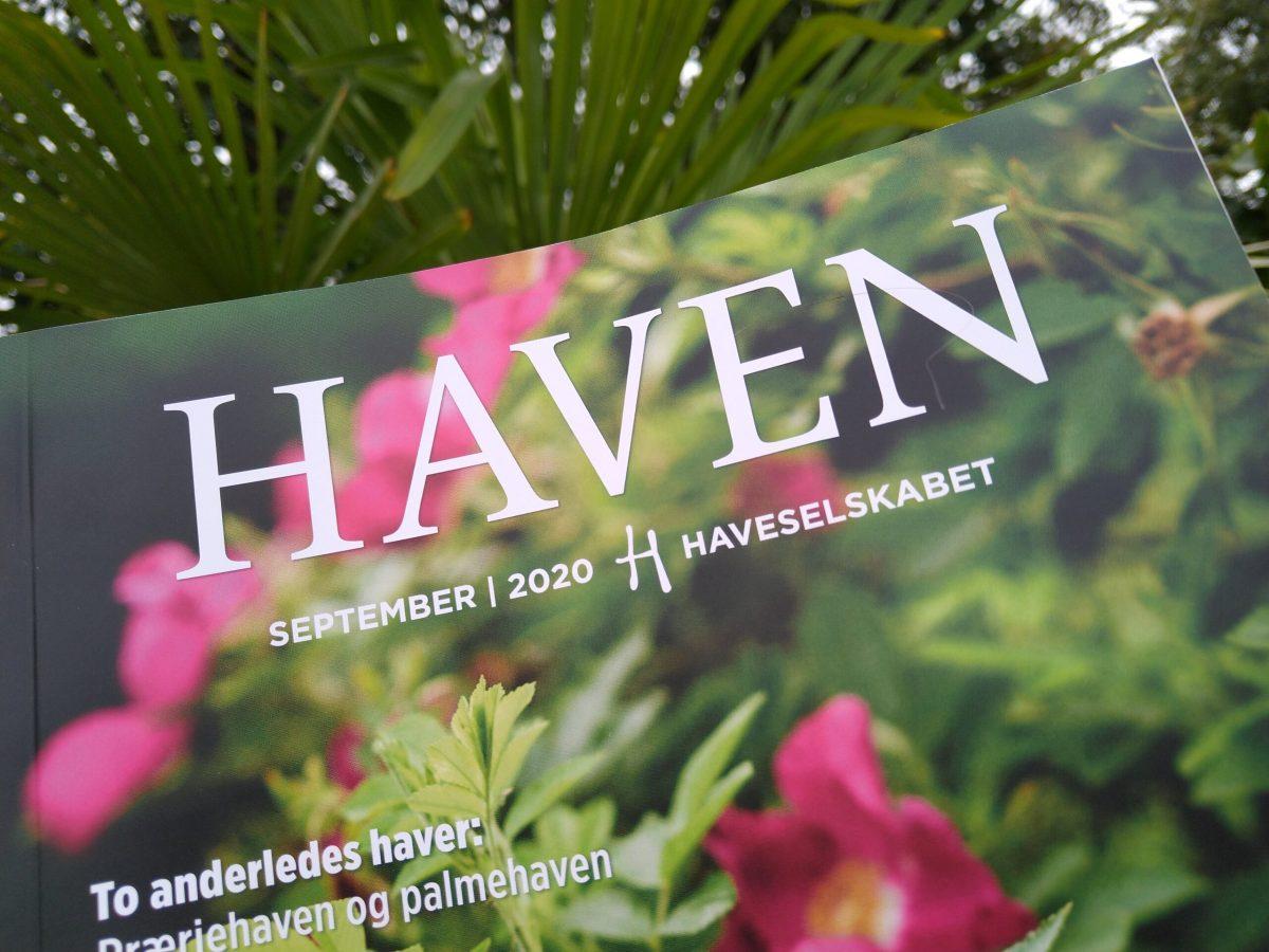 Vores eksotiske palmehave i Haven – Spørgsmål og svar
