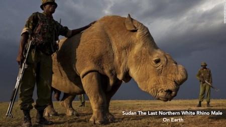 zoo Sudan the last male northern white rhino on earth | www.imjussayin.com