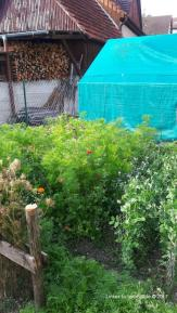 Garten Dörrenzimmern