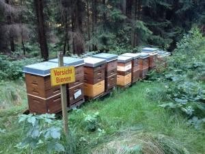 Bienenstand im Wald