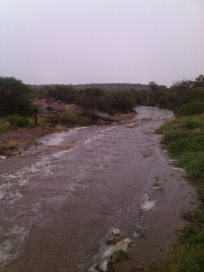 Rain on the farm and flowing rivers - Photo kindly supplied by Amanda Koekemoer