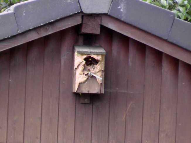 Hornissen suchen ein neues Heim