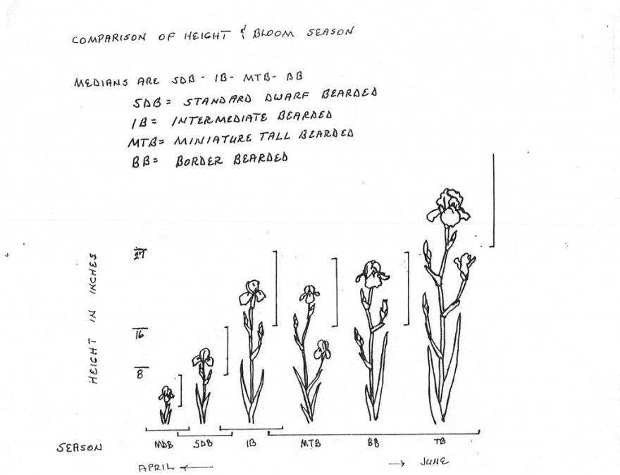 Iris Comparison of height & Bloom Season