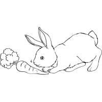 Disegno di Il Coniglio e La Carota da colorare per bambini ...