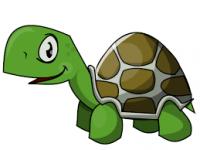 vapid-turtle
