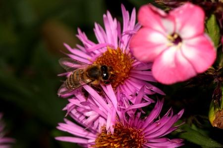 Trachtkalender  Seite 3  Warr Bienenstock  Bienenhaltung fr alle