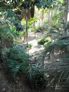 Balboa Park Dschungel