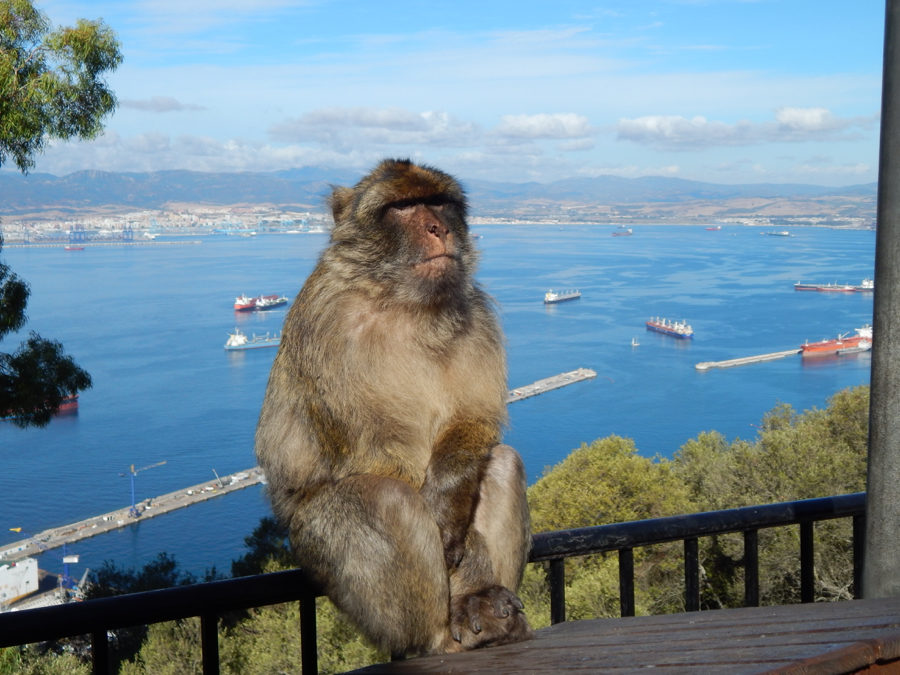 Gibraltar Kurzreise - freche Affen