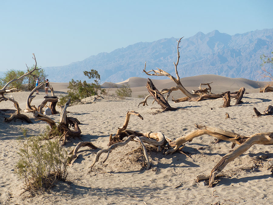 Fotoparade 2 2018 Mesquite Flats Sand Dunes