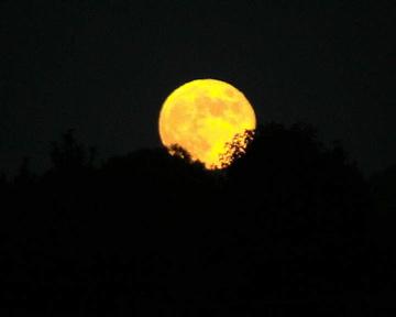 harvest-moon-1