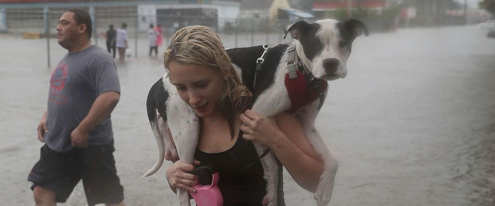 pet-rescue-hurricane-harvey2-gty-mem-170828_12x5_992.jpg