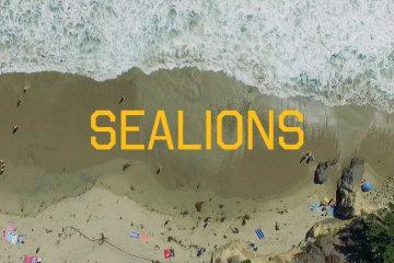 Sealions - Climbers