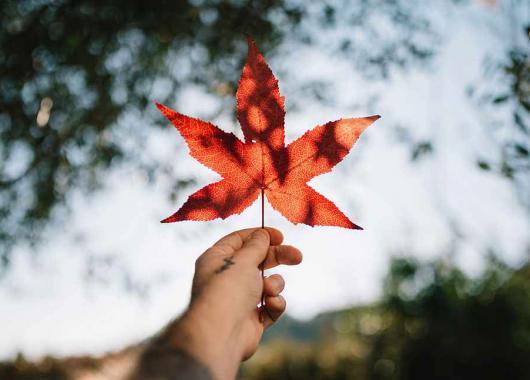 الهجرة الى كندا 2021 اشياء يعتمدها المحتالون للنصب عليك